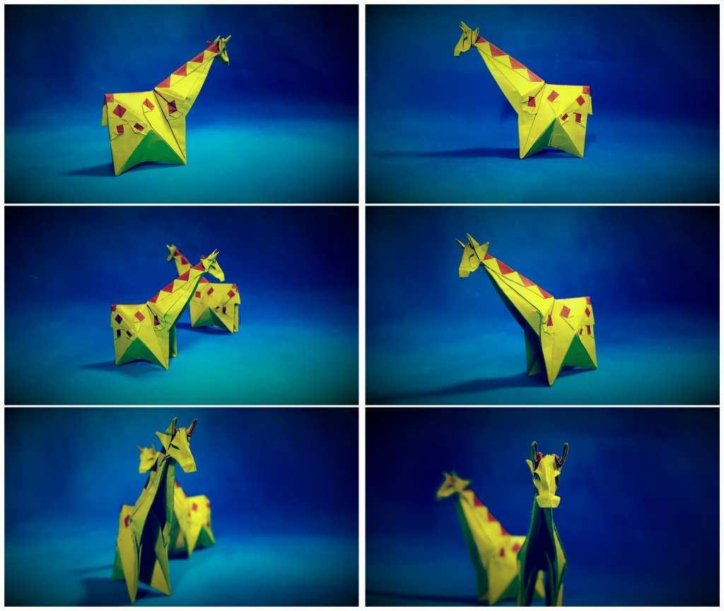 Yoo Tae Yong - 双色长颈鹿