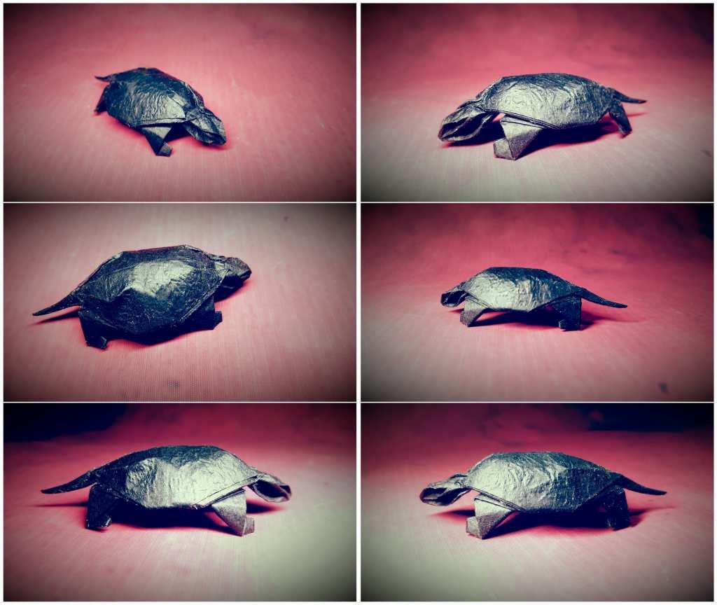 龟 (1)